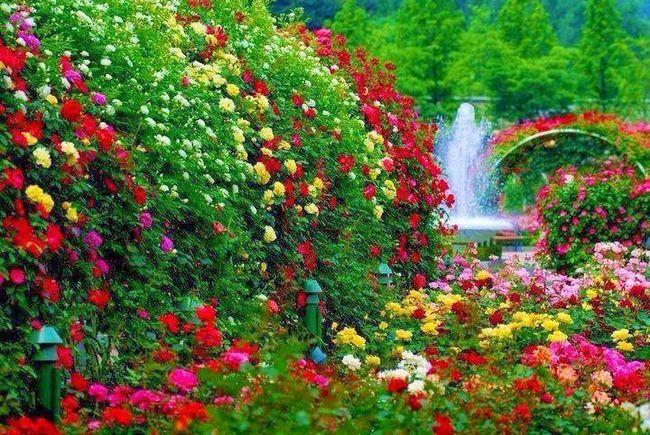Фото - Рекомендації по вирощуванню квітів на дачі