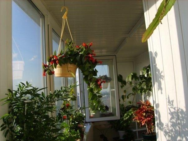 Фото - Сад на балконі