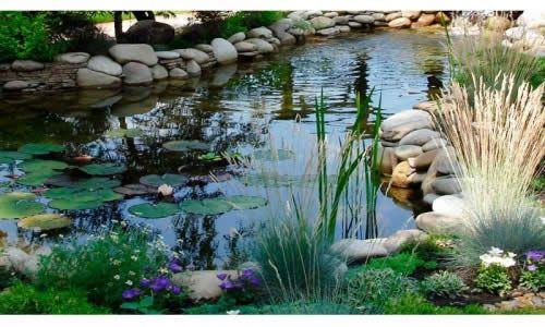 Фото - Садові рослини і їх роль для очищення водойми