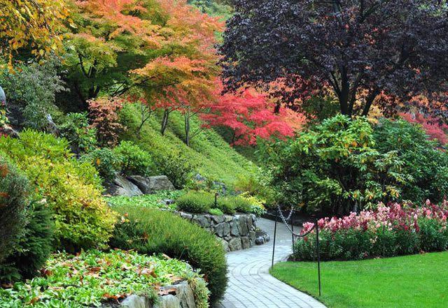 Фото - Найкрасивіші дерева для саду