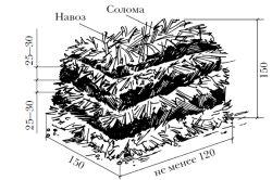 Фото - Печериці на грядках: як виростити?