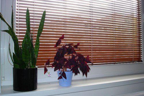 жалюзі бамбукові