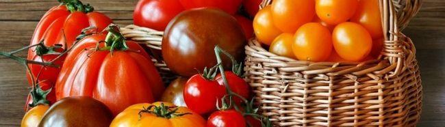 Фото - Сорти томатів і схема їх посадки