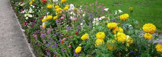Фото - Поради з облаштування квіткових грядок