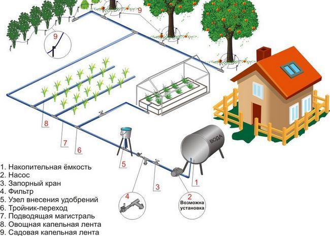 Фото - Сучасні технології поливу рослин: мікрокрапельні зрошення