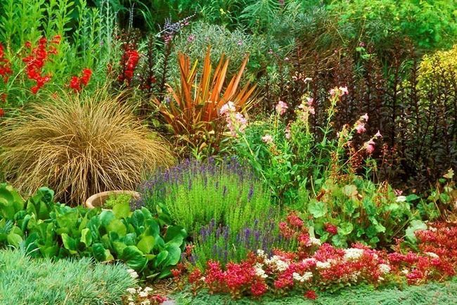 Фото - Створення клумби з садових квітів багаторічників