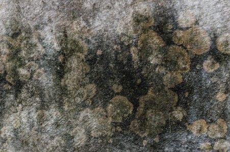 Фото - Способи видалення цвілі і грибка