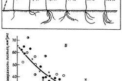 Дія освітленості на ріст і морфогенез рослин