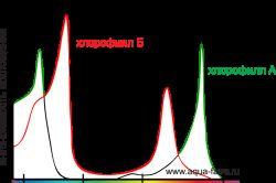 На малюнку показано поглинання світла хлорофілом.
