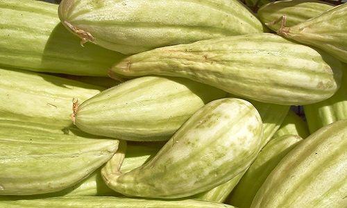 Фото - Технологія вирощування вірменського огірка