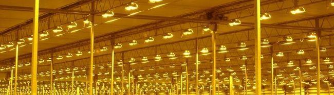 Типи освітлення для теплиці: особливості монтажу