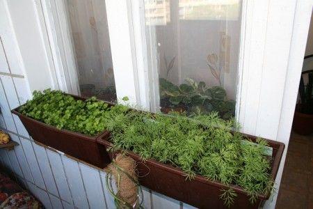 Фото - Кріп на балконі
