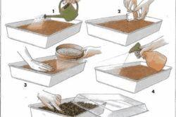 Посадка в грунт насіння полуниці