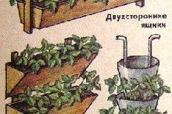 Види ємностей для вирощування полуниці
