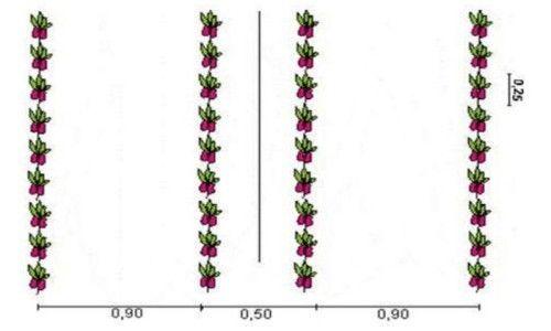 Схема посадки гіркого перцю на краплинному зрошенні