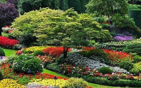 Фото - Багаторічні довгоквітучі квіти