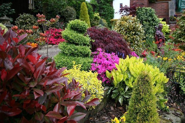 Фото - Вічнозелені рослини для озеленення саду: літо на ділянці цілий рік