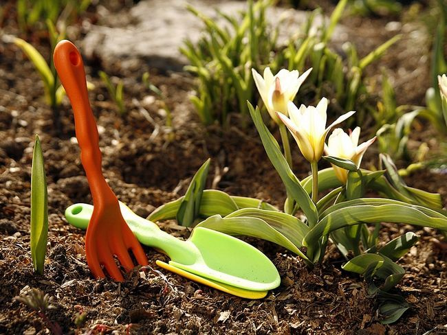 Фото - Весняні роботи на дачі: що потрібно зробити в першу чергу