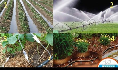 Фото - Види автоматичних систем для поливу рослин