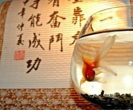 Фото - Все про акваріум по фен шуй