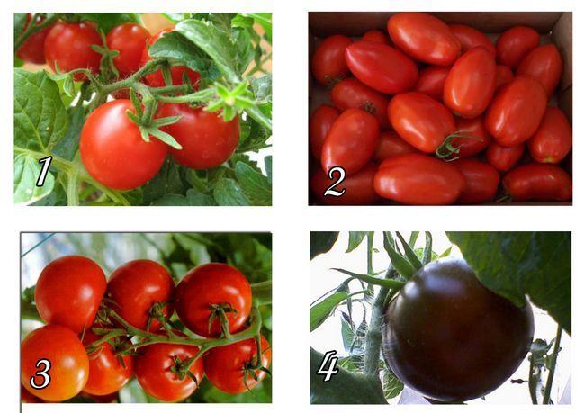 Фото - Вибір і вирощування томатів