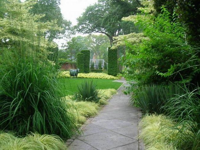 Фото - Вибір рослин для живої огорожі