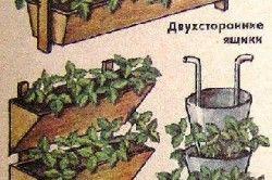 Схема видів пірамід для вирощування полуниці