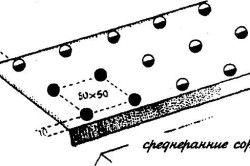 Схема посадки цвітної капусти в грунт