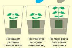 Фото - Вирощування квітів з насіння