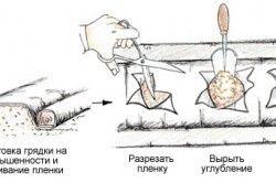Посадка полуниці на агроволокно