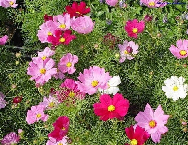 Фото - Вирощування однорічних садових квітів