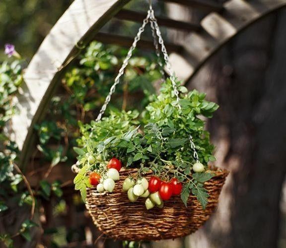 Фото - Вирощування помідорів на балконі