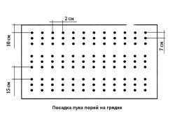 Схема посадки цибулі порей на грядці