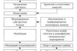 Технологічна схема вирощування гливи (однозональние технологія).