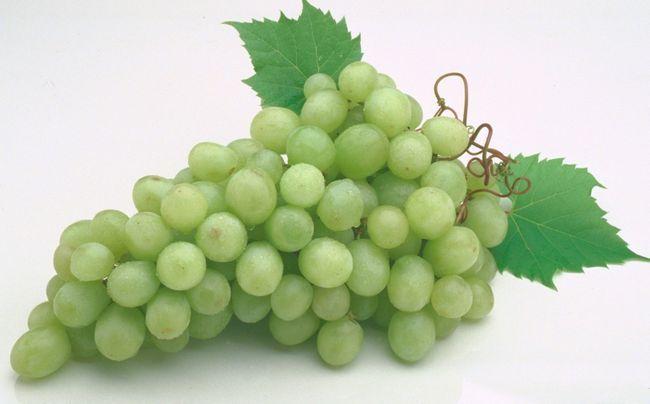 Фото - Вирощування винограду з живців