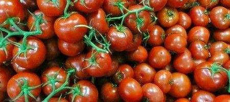 Фото - Вирощування високорослих помідорів чері