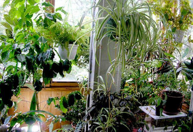 Фото - Зимовий сад на балконі